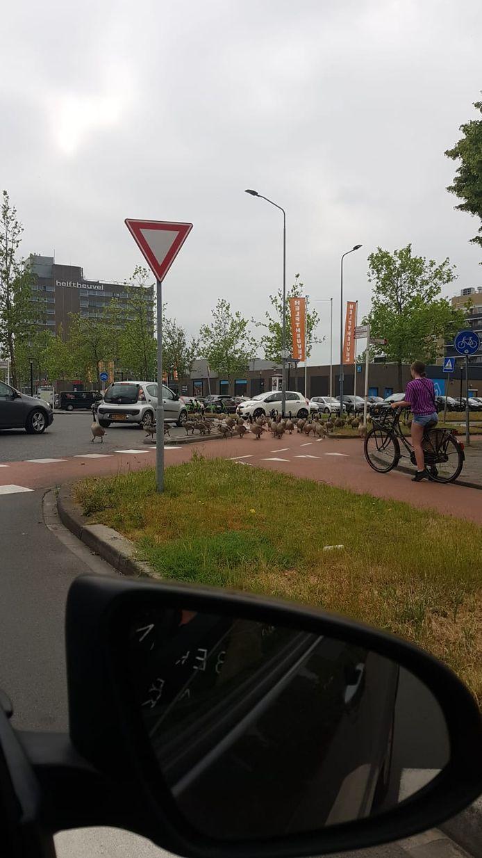 De ganzenparade op de rotonde aan de Kooikersweg in Den Bosch
