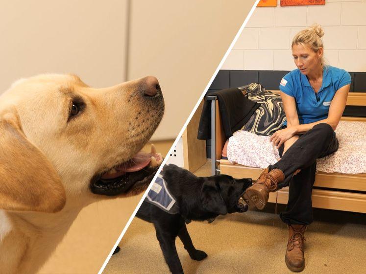 Marlies traint hulphonden: 'Vooral veel geduld nodig'