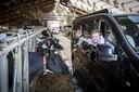 Kinderen zijn niet bang tijdens de Boer'n Koe-safari bij Kaamps in Deurningen.