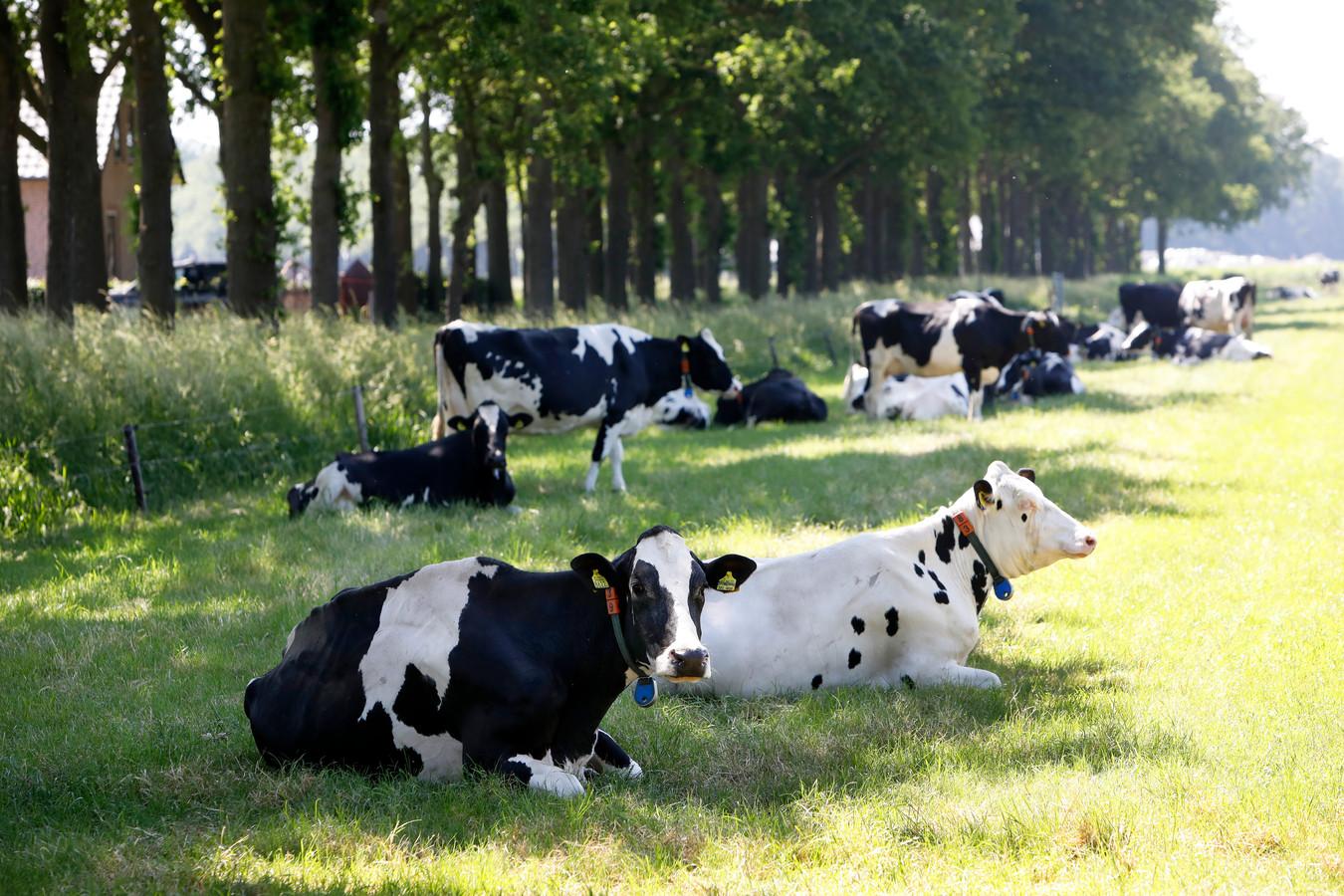 Foto ter illustratie. Zo'n 3.300 boerenbedrijven hebben buiten hun schuld om nog geen natuurvergunning.