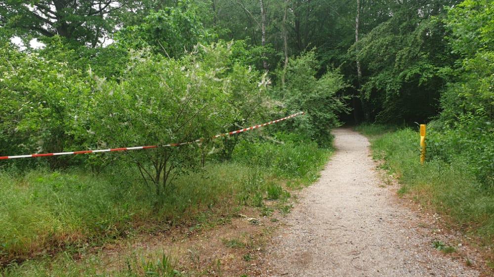 Roodwitte linten in het bos bij de Oude Telgterweg in Ermelo geven aan waar de jeukrupsen zitten.