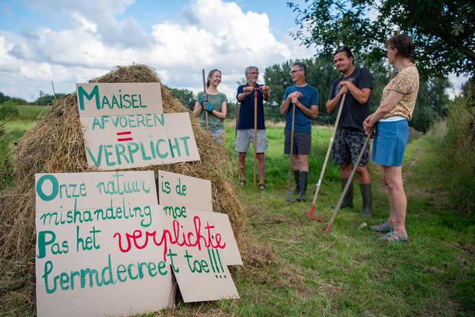 Vrijwilligers van Natuurpunt Haaltert harkten het achtergebleven maaisel langs een wandelpad in den Biest op een grote hoop om aan te tonen dat het bermdecreet nog altijd niet wordt nageleefd.
