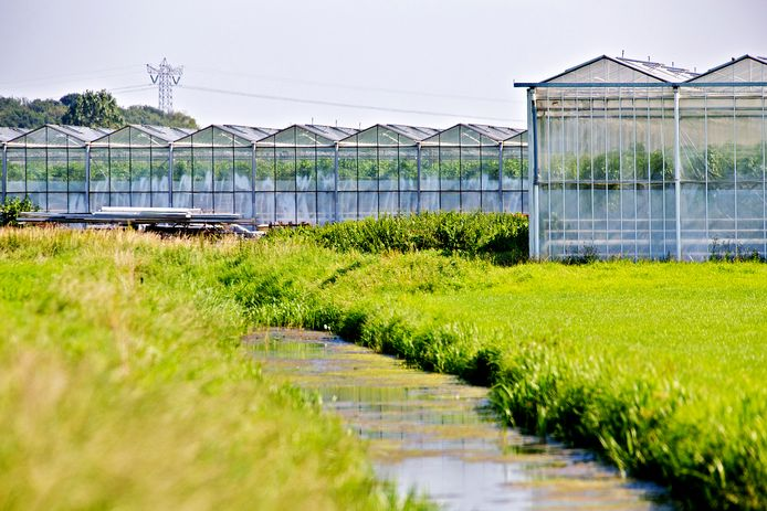 Foto ter illustratie van de glastuinbouw. In Flevoland werken relatief gezien veel uitzendkrachten.