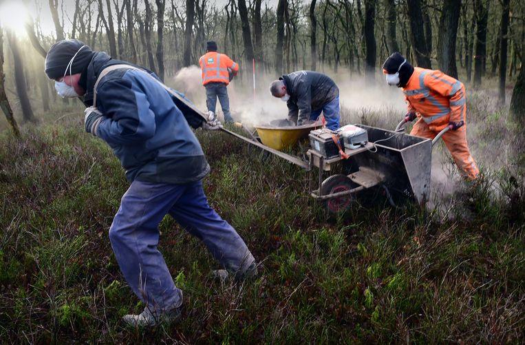 Met het strooien van steenmeel probeert de provincie Gelderland de verzuurde bodem in Uddel te herstellen. Beeld Marcel van den Bergh