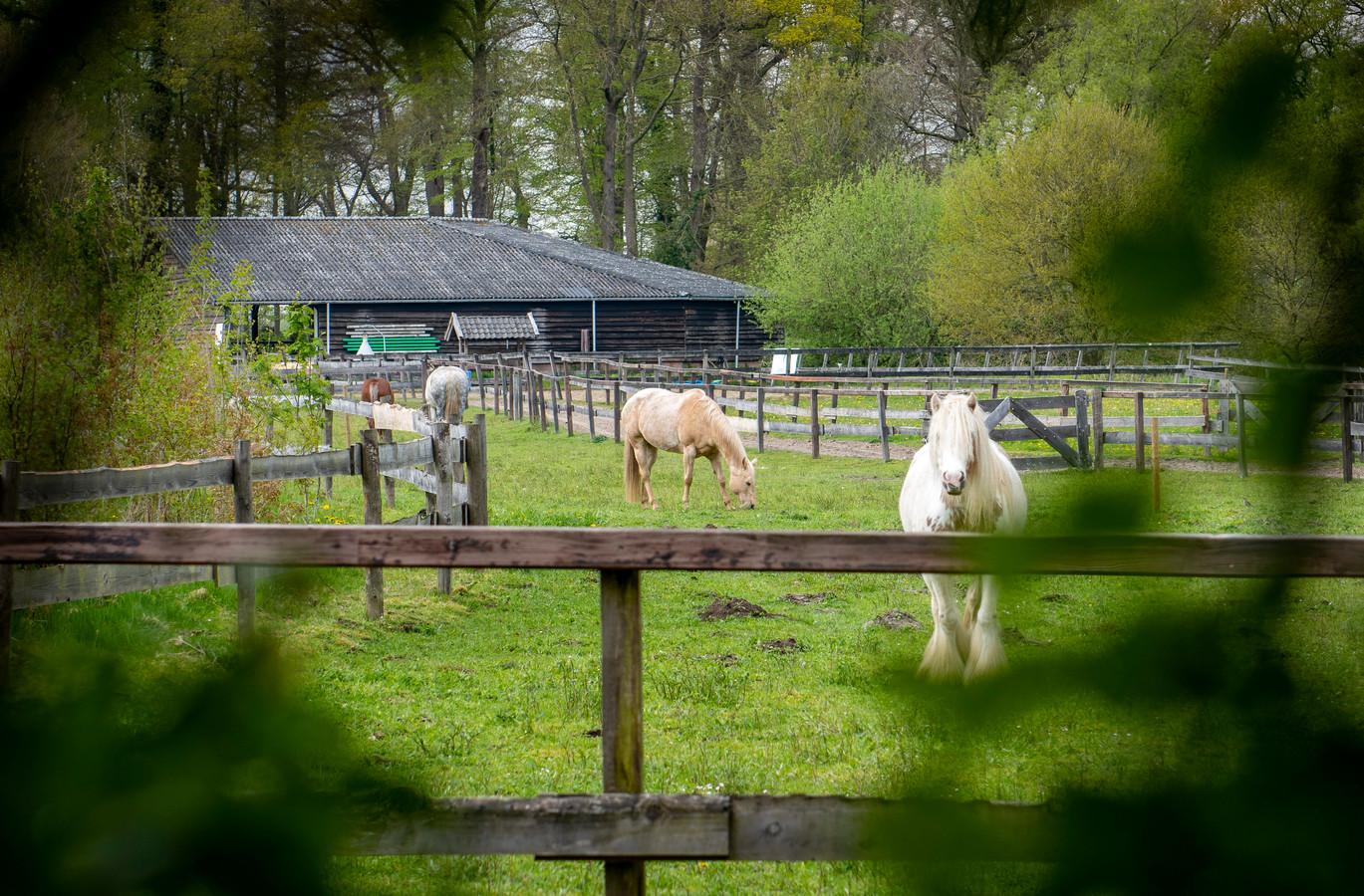 De paarden op het terrein van het paardenpark Xtreme Trail in Empe, waar gisteren een vrouw twee keer werd getrapt door een paard nadat ze een hersenbloeding kreeg. De betreffende paarden op de foto waren niet betrokken bij het incident.