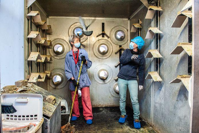 AD-journaliste Kirsten Bliekendaal helpt vrijwilliger Wil Zandvliet een handje in de Goudse duiventil.