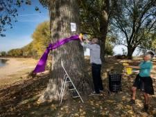 Bomen bij Bisonbaai krijgen strikken als eerbetoon, voordat ze gekapt worden