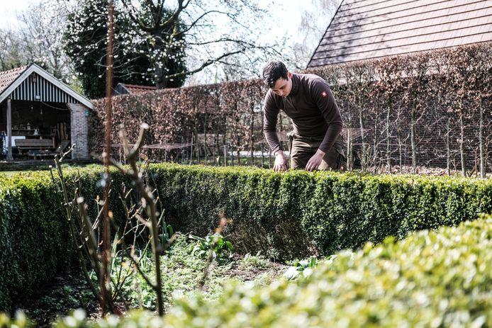 Steven Oostendorp bij een oude buxushaag die op sommige plekken al is aangevreten door de buxusmot.