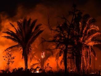 Meer bosbranden in Braziliaans Amazonewoud dan in zelfde periode vorig jaar