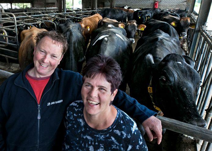 Melkveehouders Hanneke en Peter Verberne uit Vlierden met hun koeien. Op hun boerderij kunnen bezoekers tijdens de Nacht van het Witte Doek tussen de kalfjes een Franse plattelandsfilm kijken.