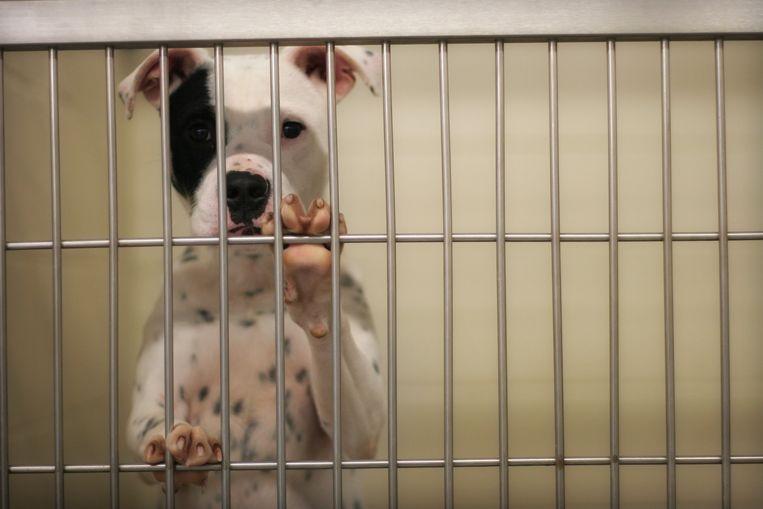 Hartverscheurend: dierenasielen krijgen dagelijks 'coronahuisdieren' terug Beeld Getty Images