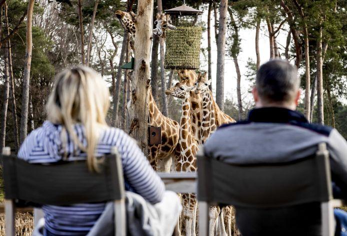 Op het terras, bijna tussen de giraffen in het Safari Resort van Beekse Bergen in Hilvarenbeek.