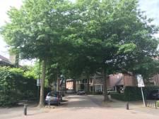 Bomen in Kaatsheuvelse straat maken plaats voor nieuw riool