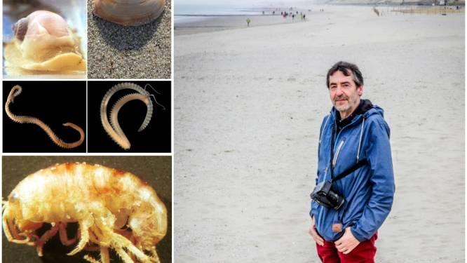 Moordlustige zeester of vechtende zandworm? Dit zijn de 10 meest angstaanjagende griezels van het strand of de Noordzee