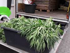 Duizend planten in ontmantelde Hengelose hennepkwekerij
