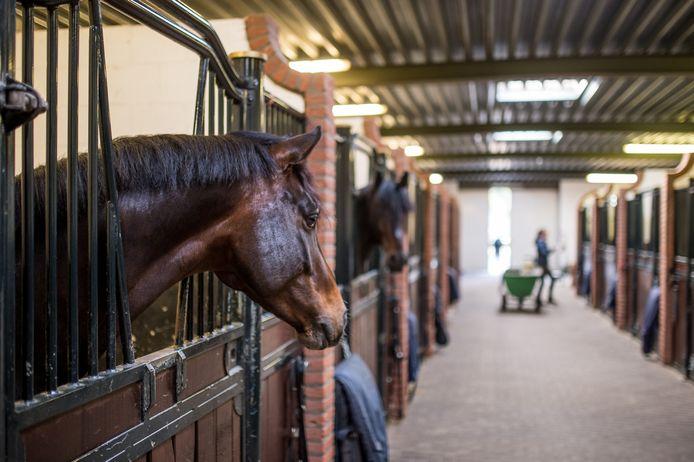 Van Olst Horses in Den Hout.
