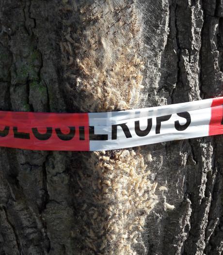 Eikenrupsen gaan door het lint in Hengelo