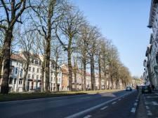 Al meer dan 80 plaatsen voor 'toekomstbomen' gevonden, nog enkele dagen om er nog te zoeken