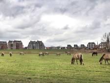 Zeer tevreden paarden in de uiterwaarden bij Druten: 'We zijn nu bijna dagelijks bij ze in het veld'