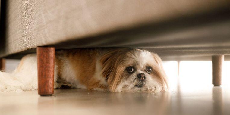 hond-kalmeren.jpg