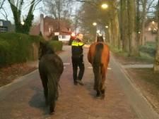 Twee paarden aan de ochtendwandeling gevangen in Heeswijk-Dinther