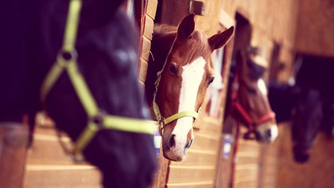 Paardensportwedstrijden tot eind maart geschrapt omwille van virus