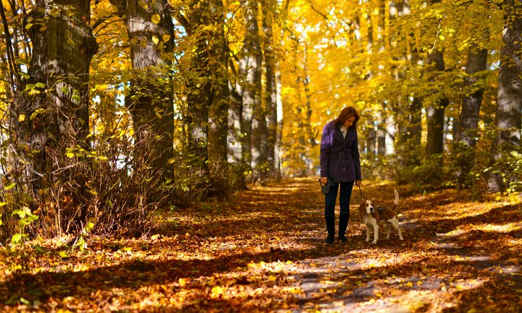 woman with dog walking in the park Beeld Getty Images/iStockphoto