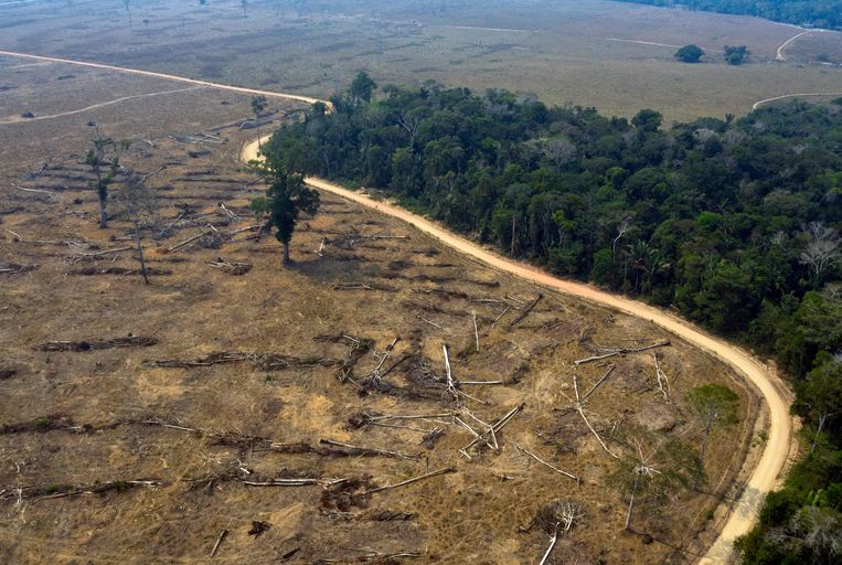 Ontbossing: 8.500 vierkante kilometer regenwoud in de Amazone is vorig jaar verloren gegaan. Beeld AFP