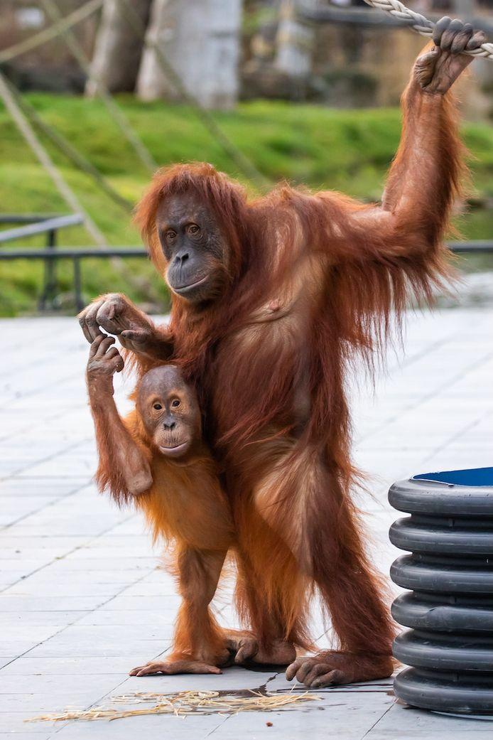 Sari en haar zoon Berani.