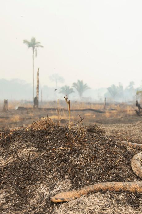 L'Amazonie, poumon de la planète, pourrait bientôt disparaître