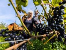 Open dagen in Hurwenen en Schijndel: Wijn maken is een kwestie van logisch, kritisch en vrij denken