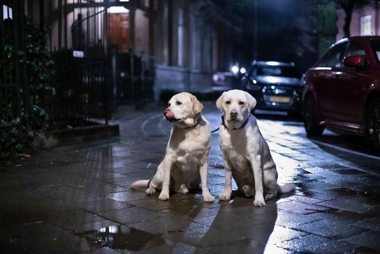 Barly en Ted, Vondelpark. Beeld Mascha Jansen