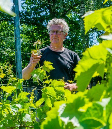 Schade aan Brabantse wijnen door nachtje vorst