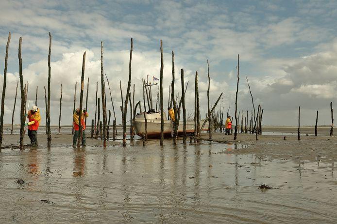 Tom Franken van de Bergse fotogroep Nadir maakte dit typische beeld op de Oosterschelde. Dit is het weervissen, het vissen op ansjovis. Dat gebeurt al jarenlang traditiegetrouw door de familie van Dort.