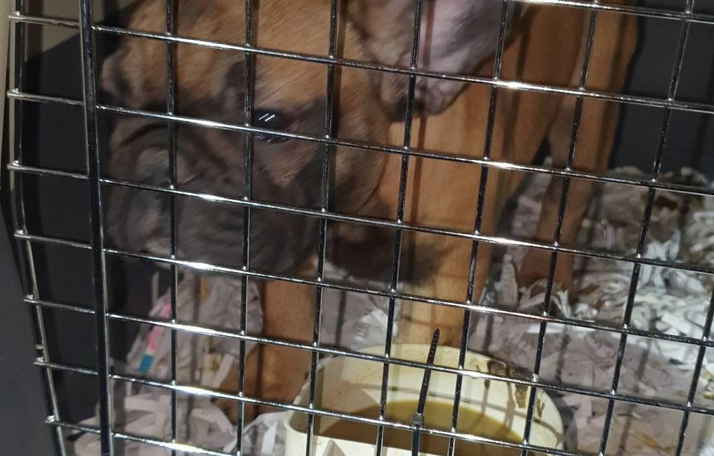 Meer dan dertig honden werden in het busje gepropt.