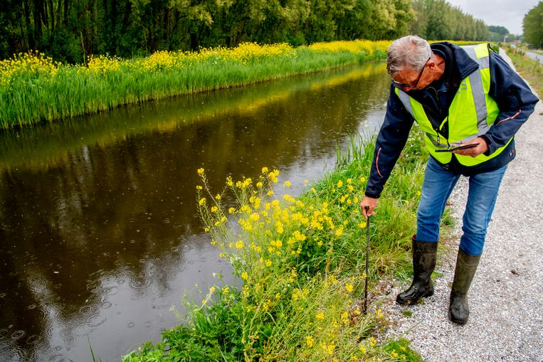 Het hoogheemraadschap van Delfland inspecteert vanwege de aanhoudende droogte veendijken in het werkgebied. Veendijken kunnen door de droogte sneller krimpen en barsten dan andere dijken. Beeld Hollandse Hoogte / ANP