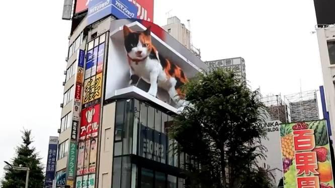 Gigantische kat houdt inwoners Tokio in de gaten