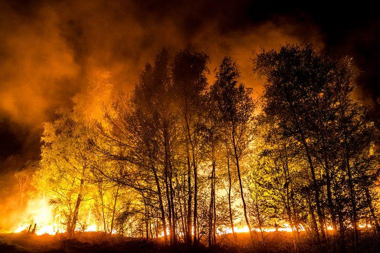 Vuurhaarden bij een zeer grote natuurbrand in de Mariapeel nabij Deurne.  Beeld Hollandse Hoogte / ANP