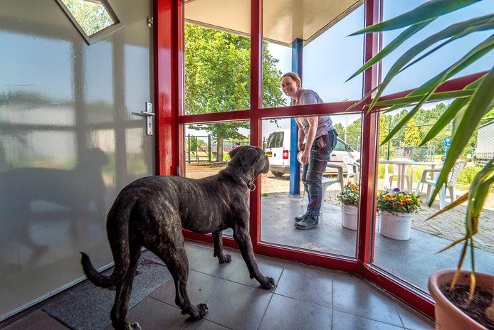 Diana Hokke roept Zoetermeerders op om hun hond te leren alleen thuis te kunnen zijn.