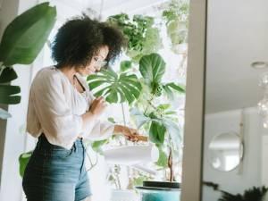 Redonnez vie à vos plantes vertes grâce à une simple peau de banane