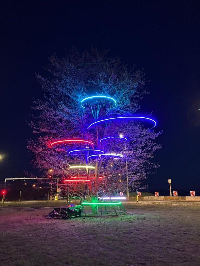 De boom staat aan het kruispunt van de N44 en de Aalterbaan in Maldegem.