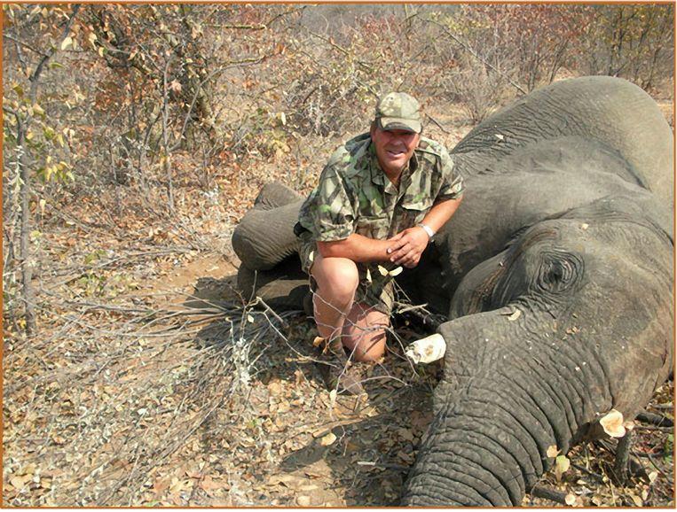 Een man poseert met een geschoten olifant. Beeld Photo News