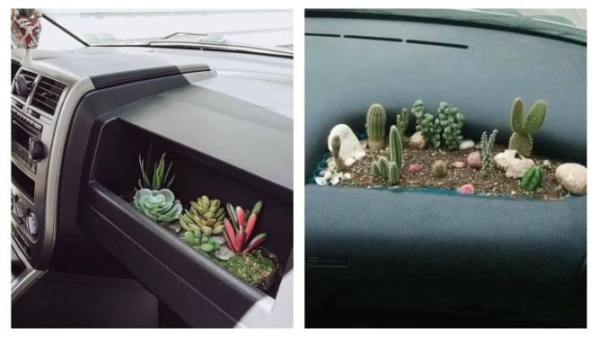 Eentje voor extreme plantenliefhebbers: met 'cardening' voeg je een vleugje groen toe aan je dashboard