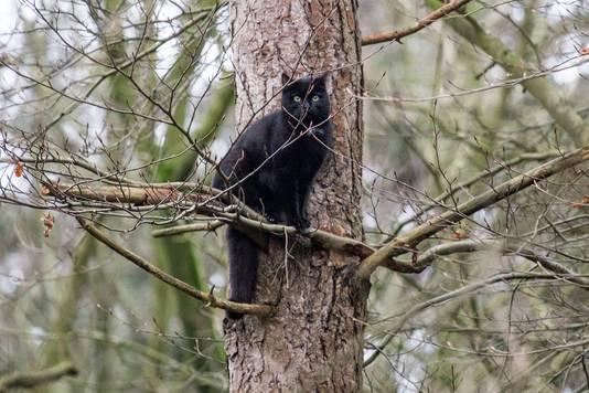 Kat in de boom in Rucphen