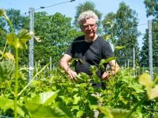 Fietsroute verbindt wijngaarden Soerendonk tijdens open dag