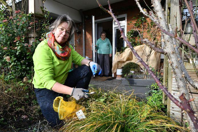 Giny de Graaf trekt onkruid in tuin van haar moeder.