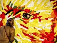 'Van Gogh werd in Den Haag schilder'