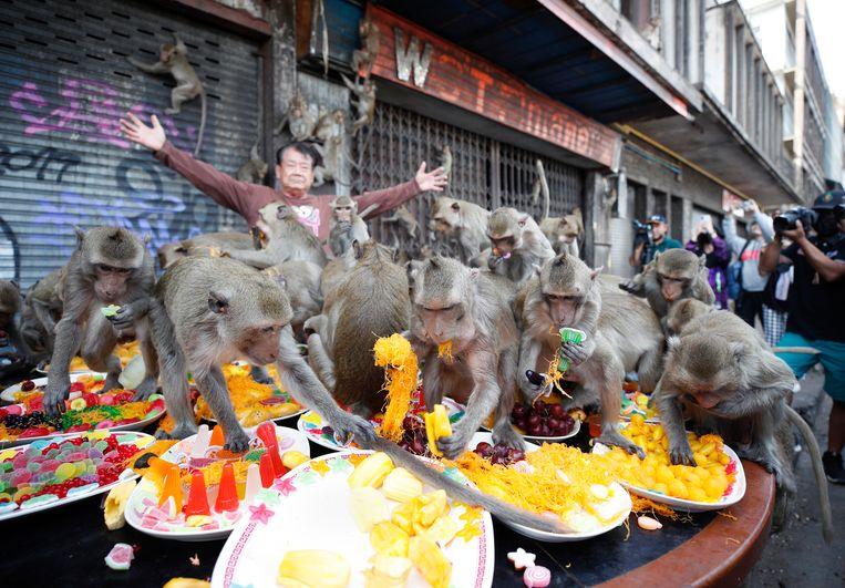 Makaken doen zich tegoed aan een groente- en fruitbuffet tijdens het jaarlijkse 'apenbanket' in Lopburi, Thailand. Het feest is een ode aan de duizenden apen in de stad, die een belangrijke bijdrage leveren aan het toerisme. Beeld EPA