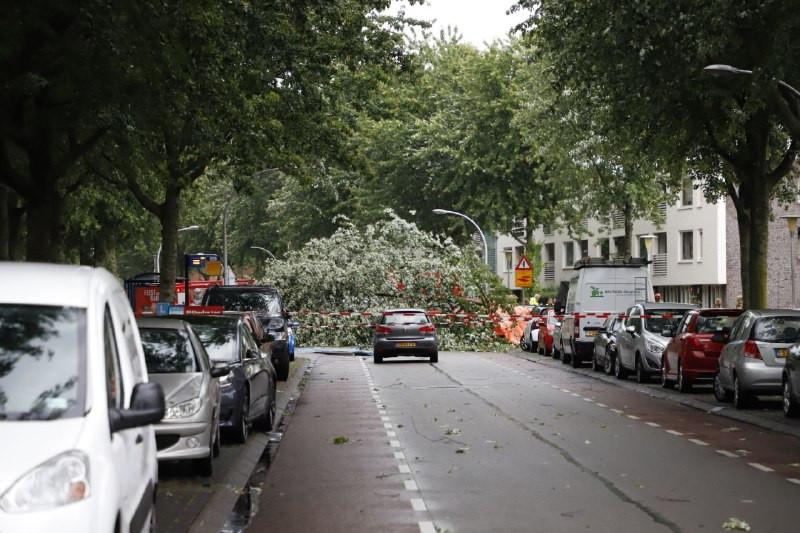 De Drapenierlaan in Zwolle.