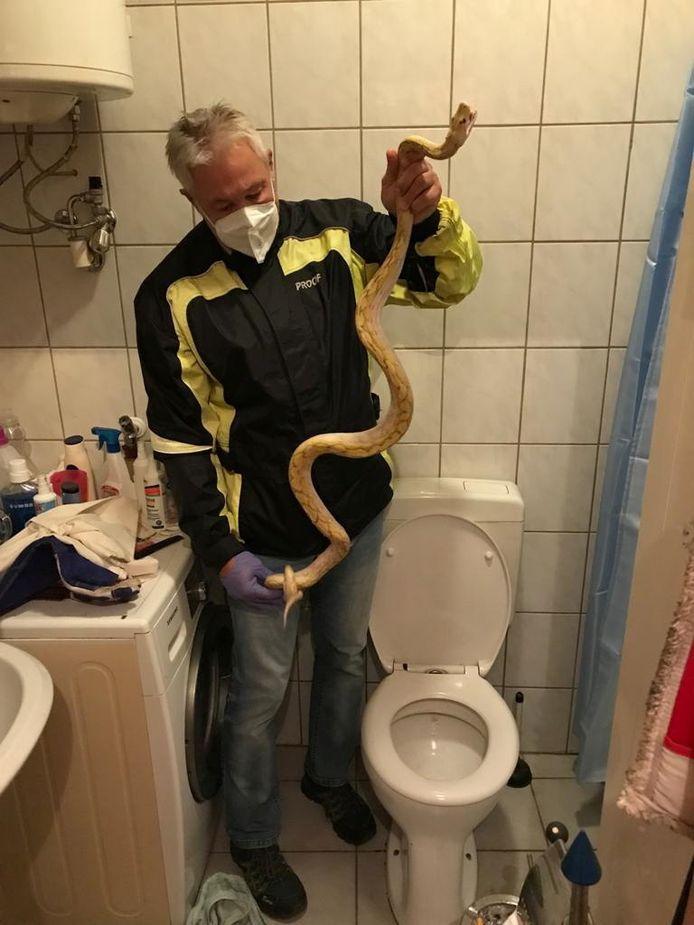 Een reptielenexpert met de slang en het toilet in kwestie.